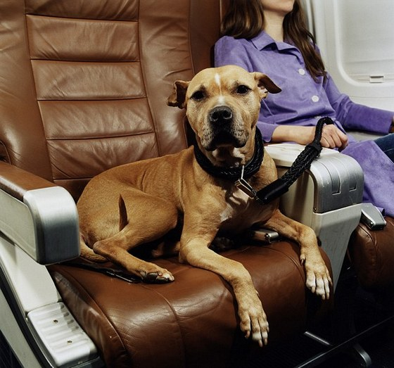 перевозка собак в Европу