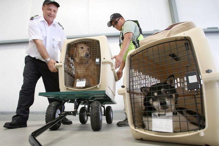 Как перевезти за границу кота или собаку