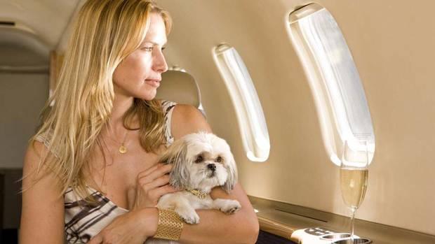 Перевозка животных самолетом