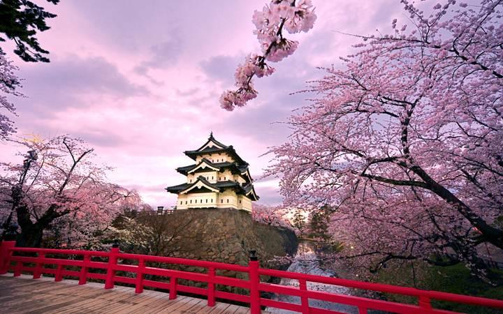 Международный перевозки из Японии