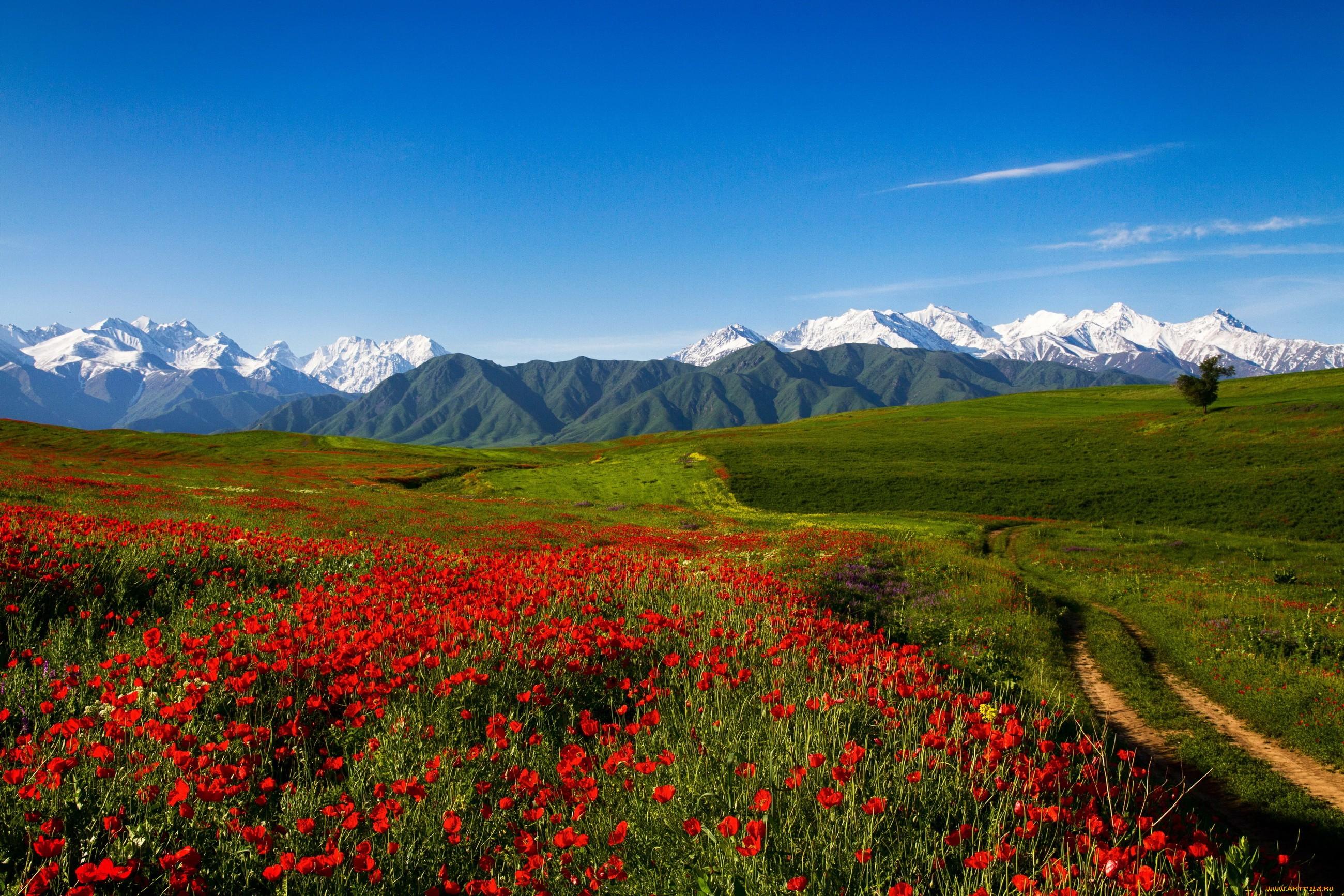 Международные перевозки из Киргизии
