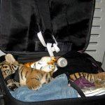 международные перевозки животных