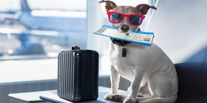 Нові стандарти авіаперевезення тварин